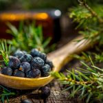 Juniper Berry Odeur
